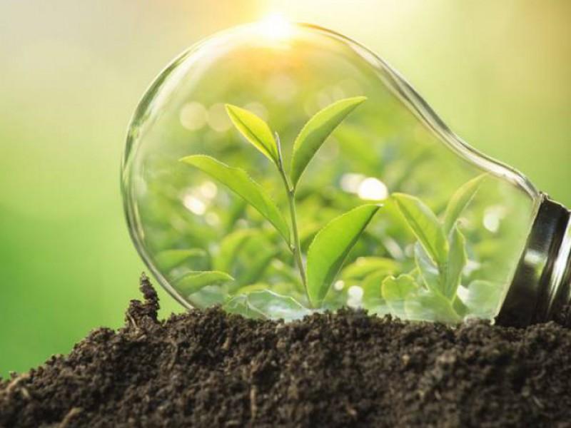 Ampoule verte pour un fournisseur d'électricité verte.